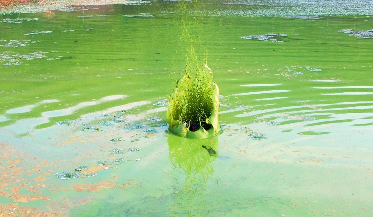 강물이 튀겨 마치 '녹조 왕관'처럼 보인다. 목사인 내가 왜 장로 대통령의 4대강 사업을 반대한 것일까?