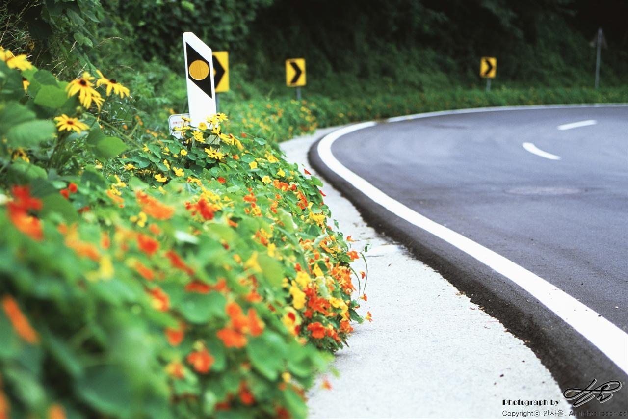 인제로 가는 길 (LX/CT100)일부러 심었는지 스스로 자랐는지, 제 철을 만난 붉고 노란 꽃들이 도로 변을 아름답게 수놓고 있다.