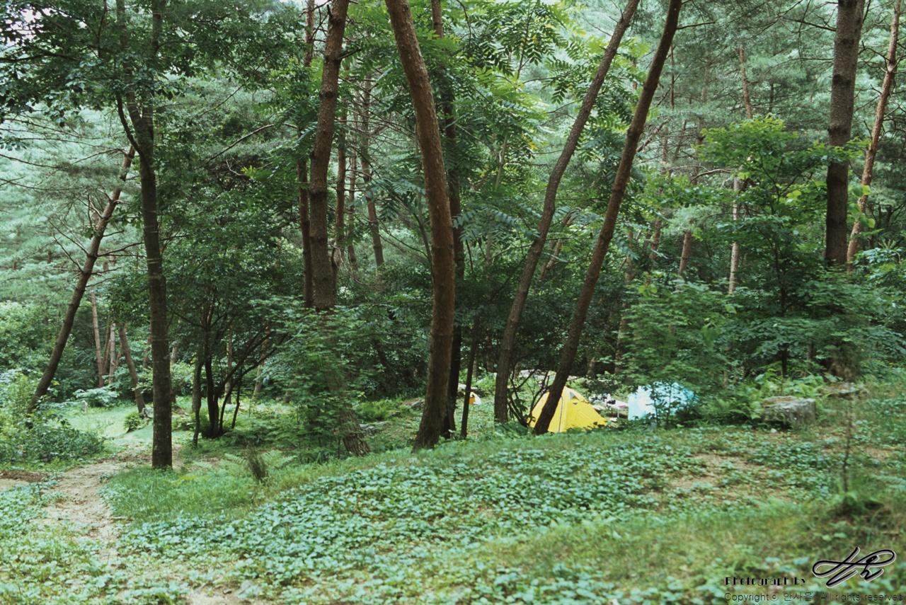 하늘내린터 내 야영지 (LX/CT100)이 정도 규모의 야영지가 4군데 정도 분포되어있다. 극성수기의 휴가철이지만 매우 한적하고 호젓하게 숲속 야영장에서 쉼을 얻을 수 있었다.