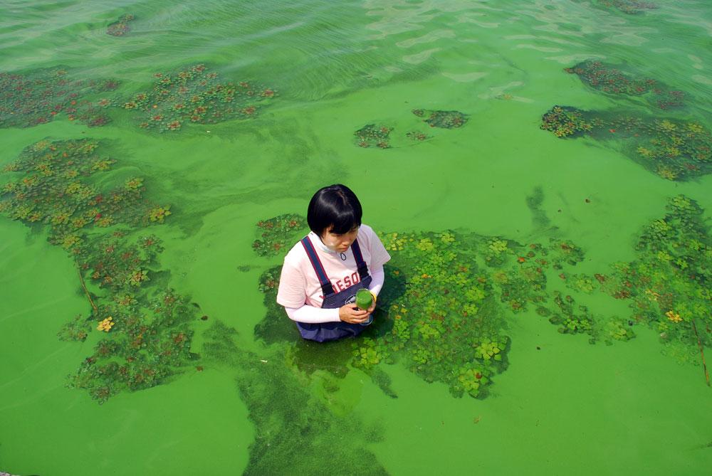 '녹조라떼' 페인트를 풀어 놓은 듯 녹색 강물을 와인 잔에 담았다.