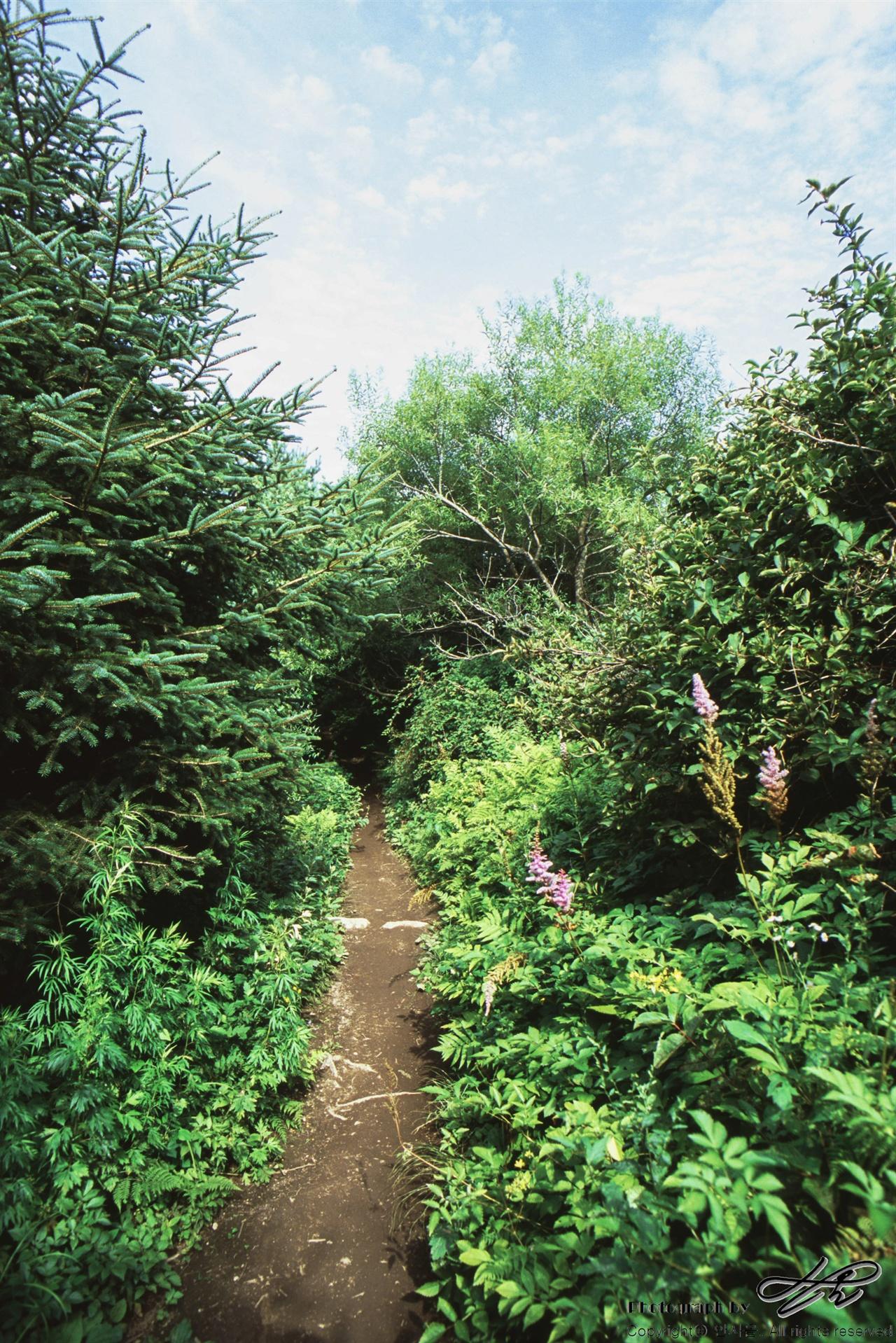 농장 숲길 (LX/CT100)농장의 이곳 저곳으로 연결되어있는 산책로. 총 연장 길이는 약 1시간 정도의 코스라고 한다.