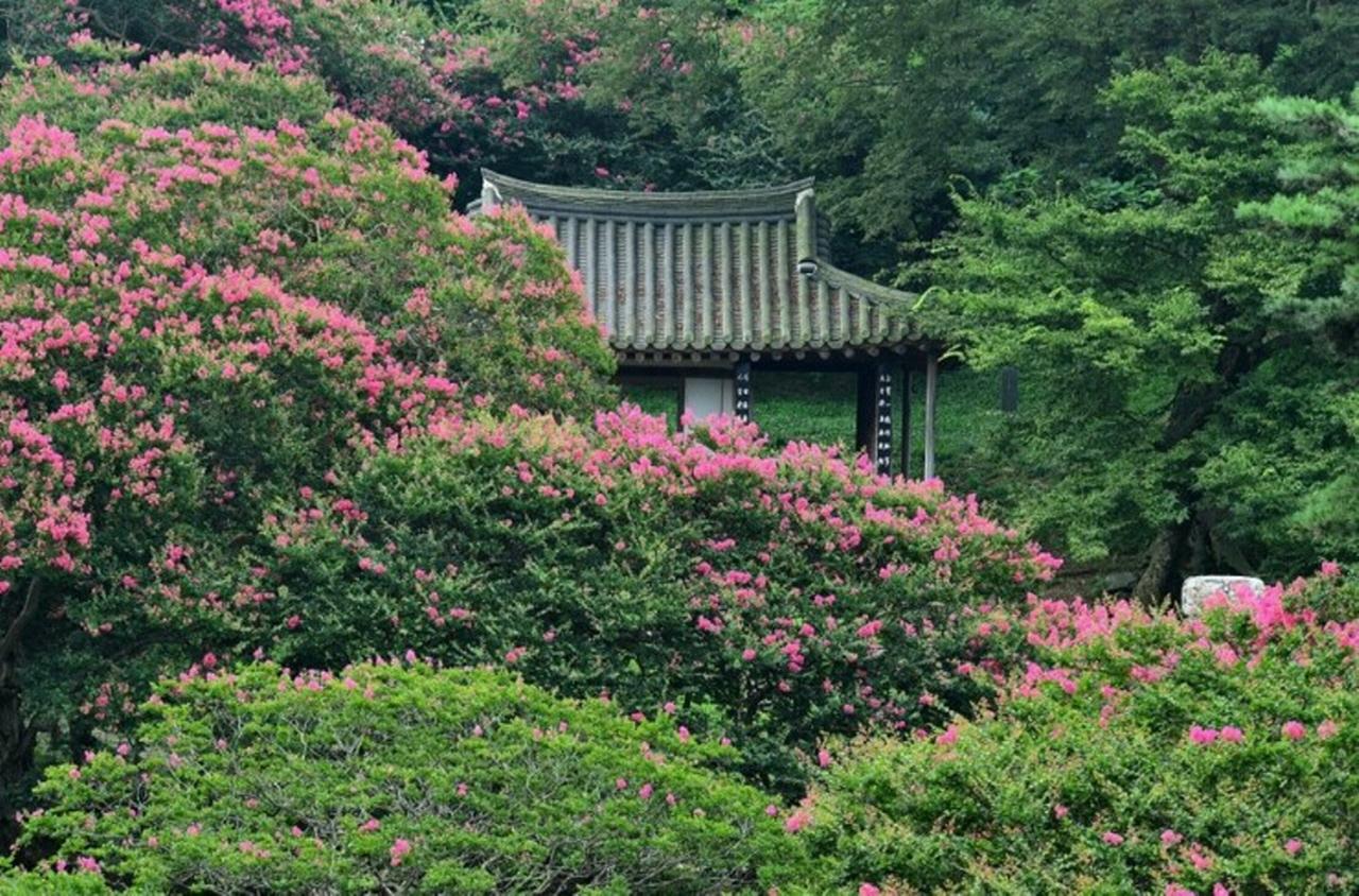 전남 담양군 고서면 후산마을에 있는 명옥헌. 배롱나무 숲 속에 고즈넉하게 앉아 있다