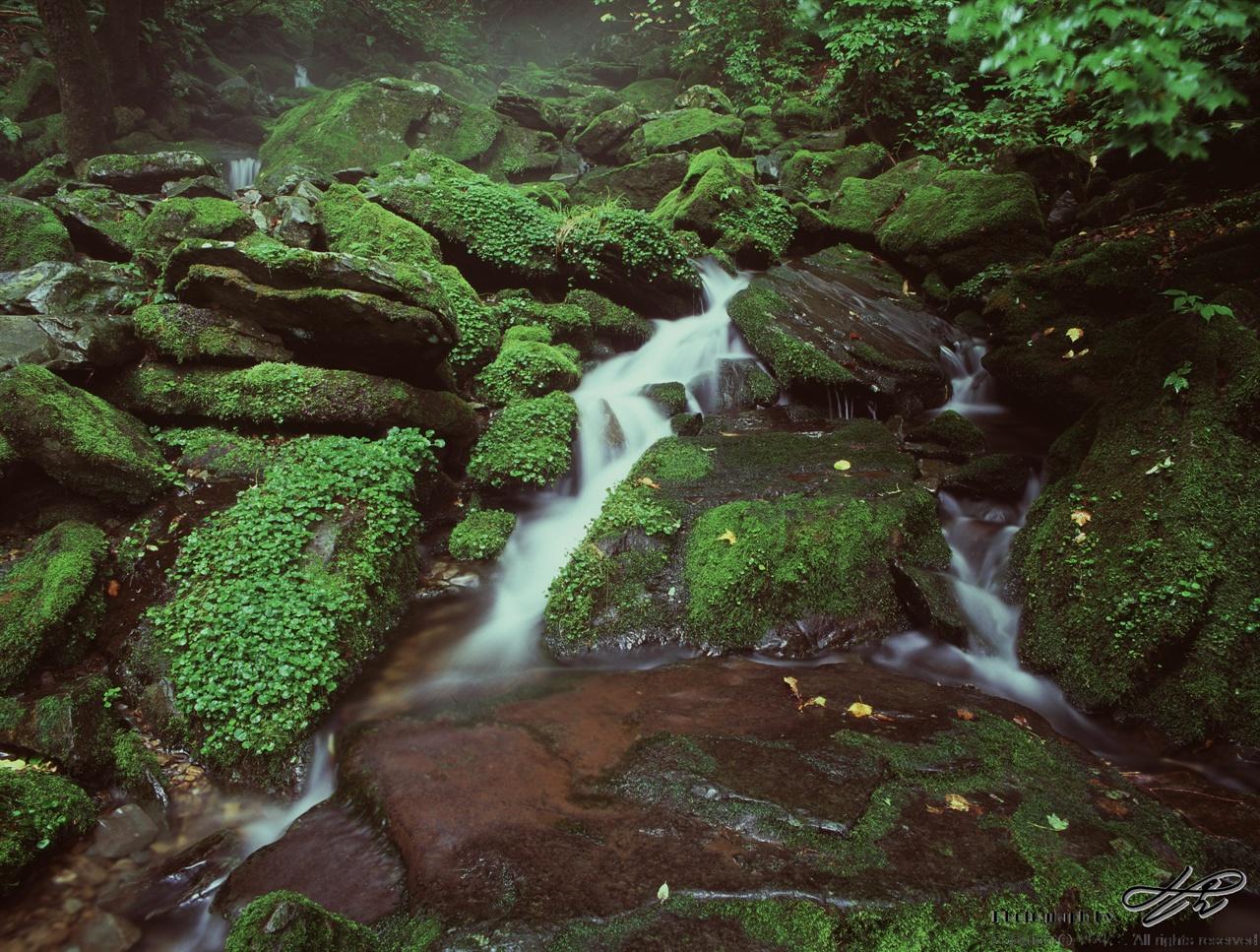 이끼와 계곡(1) (67ii/Velvia100)평창 장전계곡의 상류로 가면 이같은 이끼계곡을 만날 수 있다. 3대 이끼계곡 중 하나라고 한다.