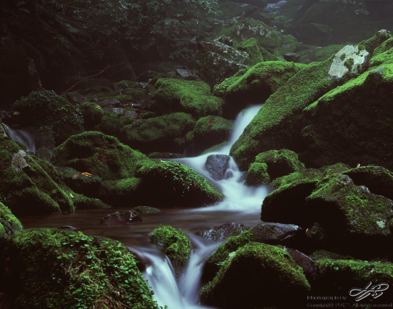 이끼와 계곡(5) (67ii/Velvia100)