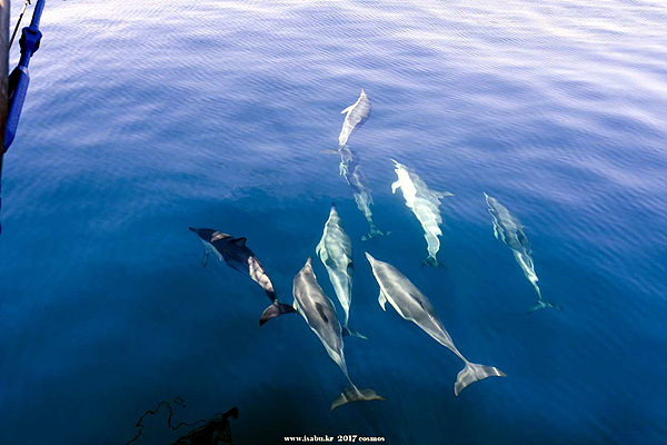 """코리아나호 옆에 붙어서 경주를 벌이는 돌고래들이 귀여웠다. 누군가 """"너무 예뻐 바다로 뛰어들어 안아주고 싶다""""고 말했다"""