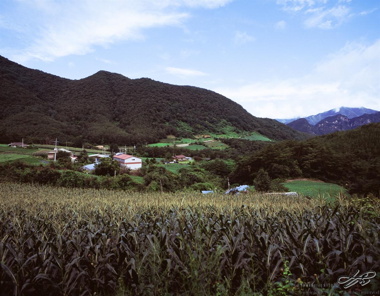 연포마을 (67ii/Velvia100)동강고성안내소에서 4시 반 방향 가까이 깊은 우회전을 하여 2킬로미터 남짓 진행하다보면 옥수수가 익어가는 정겨운 마을이 눈에 들어온다.
