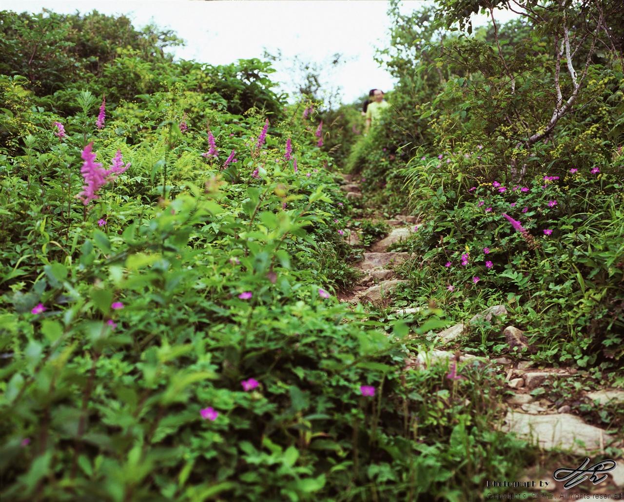 보라색 꽃들 (67ii/Veivia100)임도가 끝나고 정상으로 가는 100미터 남짓의 등산로. 보랏빛 꽃들이 반겨주고 있었다.