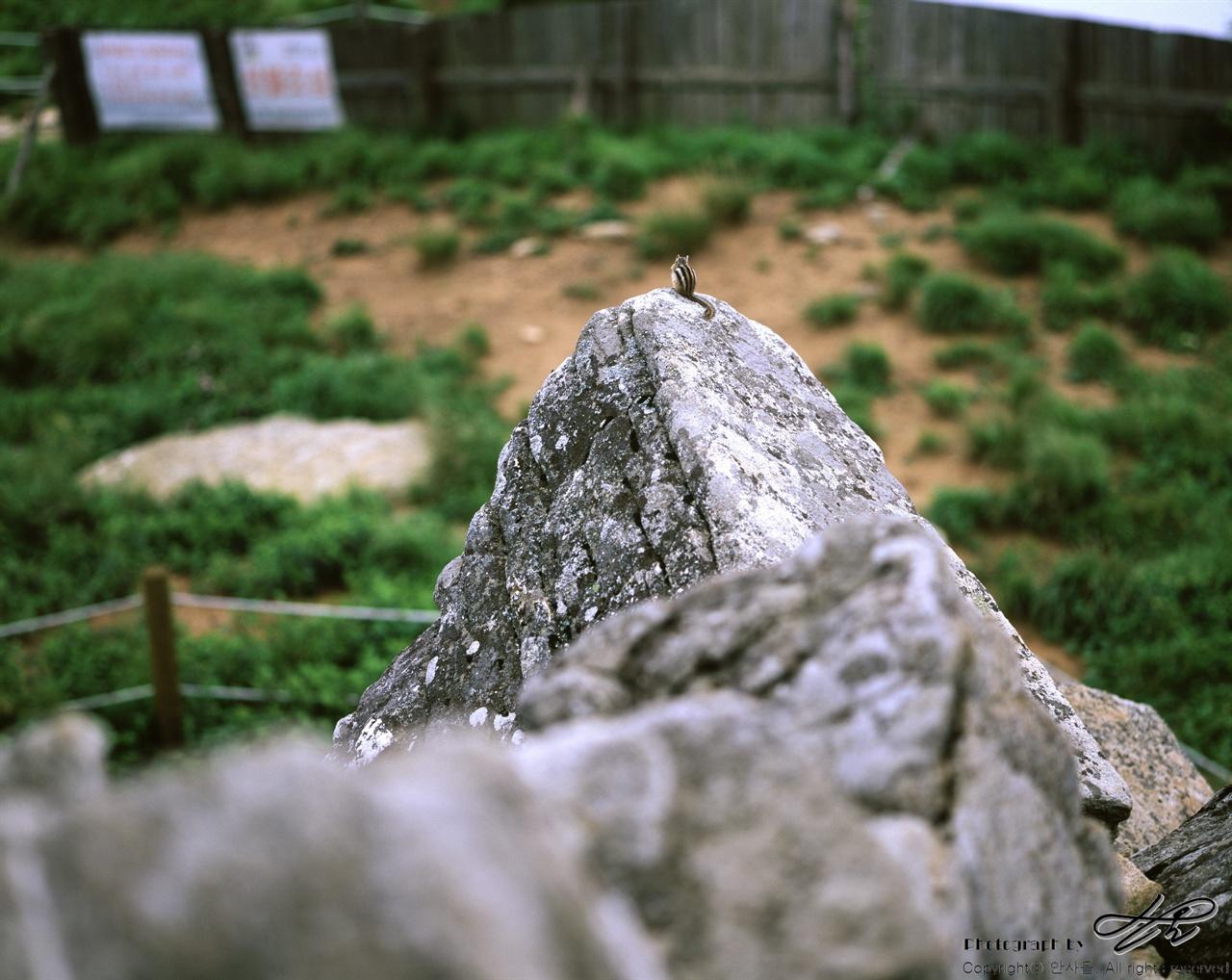 함백산 다람쥐 (67ii/Veivia100)사색에 잠긴 다람쥐. 망원렌즈로 갈아 끼울 동안 자리를 지켜주어서 참 고마웠다.