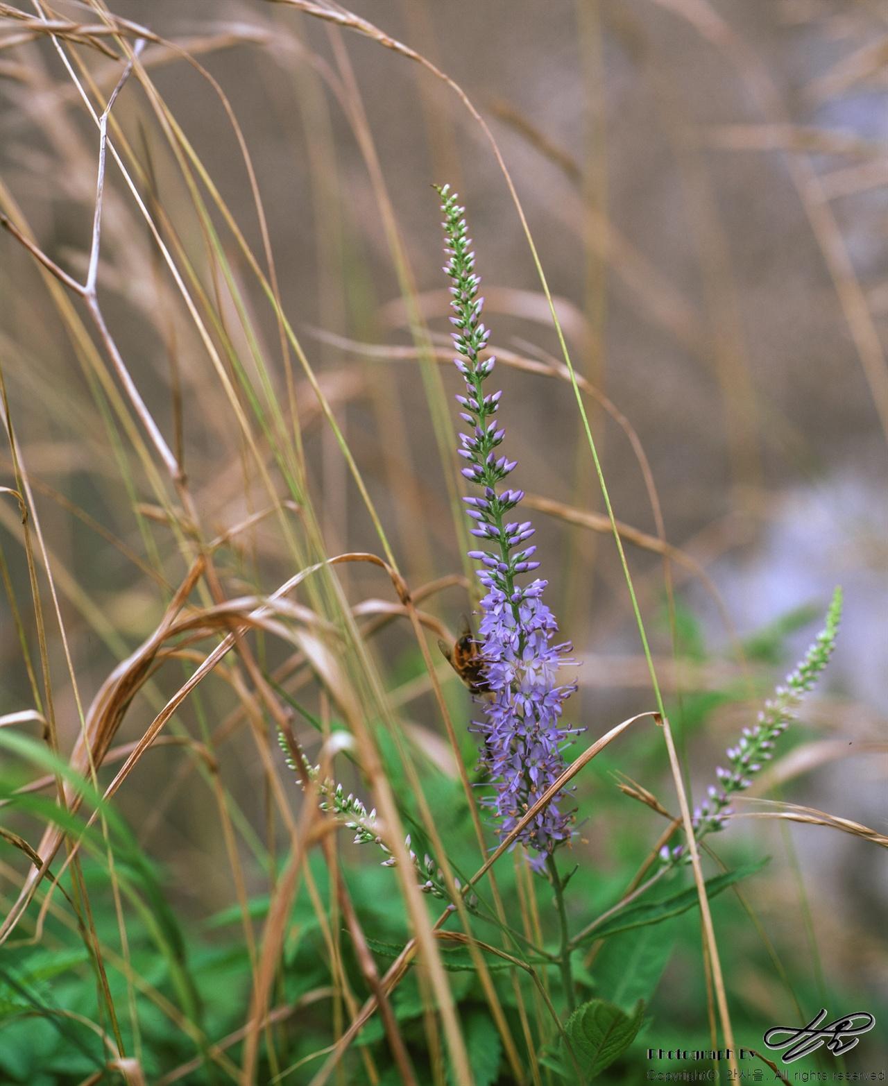 꽃과 벌 (67ii/Velvia50)