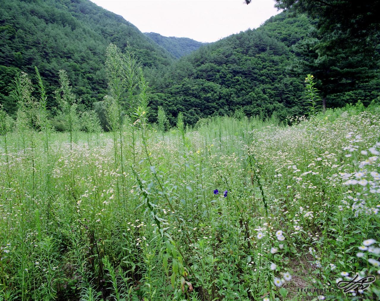 도라지꽃 (67ii/Pro160)과거에 누군가가 밭을 일구었음직한 공터에 남색 도라지꽃이 피어있다.