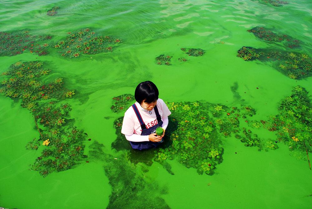 금강이 끈적끈적한 녹조로 뒤덮었다. 녹색 페인트를 풀어 놓은 듯 창궐한 녹조밭에 성가소비녀회 최 다니엘 수녀가 들어갔다.