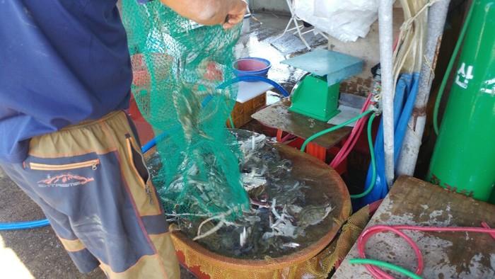 마무리 작업은 소매 할 수 있게끔 물통에 꽃게와 전어를 옮겨서 넣은 일이었습니다.