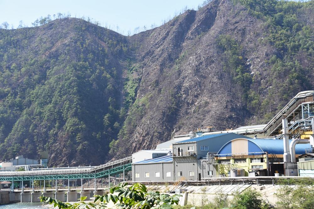 영풍제련소 1공장 뒤편의 산등성이의 나무들이 대부분 고사했다. 공장의 아황산가스 등이 원인이다.