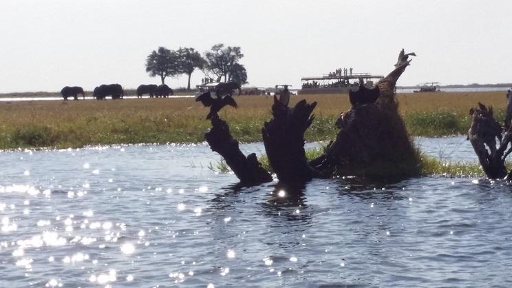몸을 말리고 있는 가마우지들 강변의 고사목이나 바위 등에는 가마우지들이 앉아서 사냥을 하고 나서 젖은 몸을 말리는 모습들을 많이 볼 수 있다.