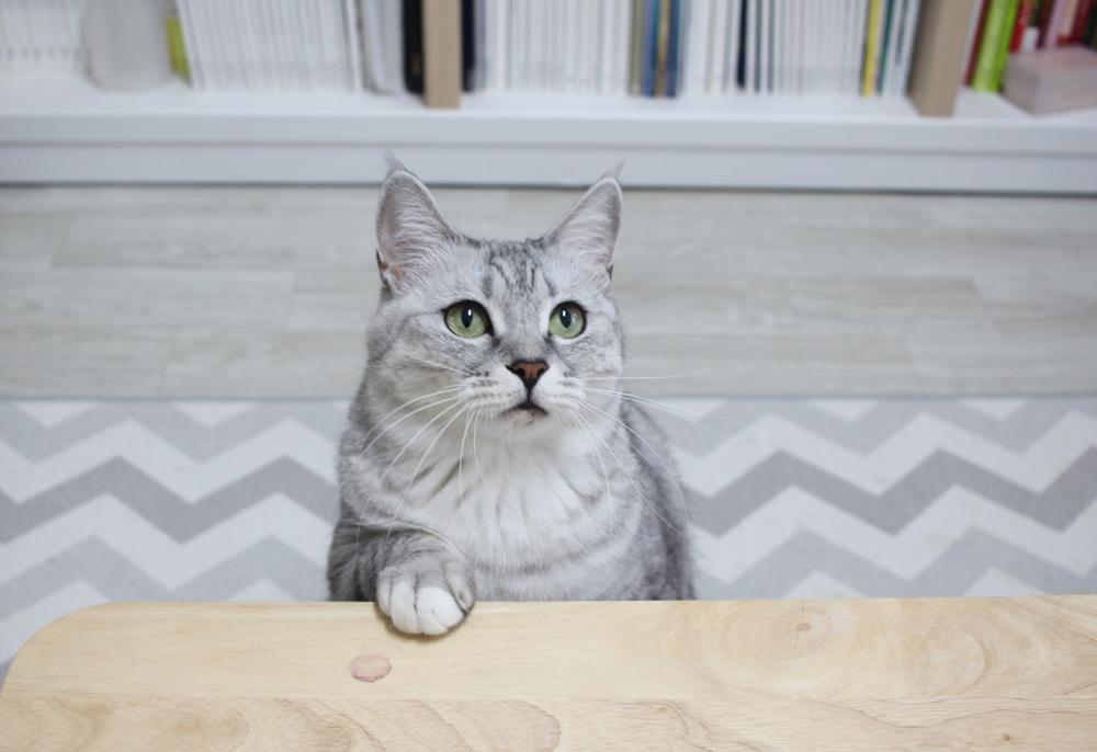 고양이는 환경 변화에 쉽게 스트레스를 받는다