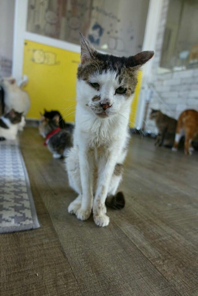 치료비가 부족해 치료가 미뤄지고 있는 쉼터의 고양이들