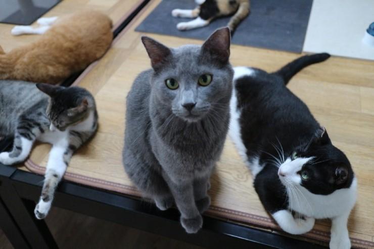 입양을 기다리고 있는 쉼터의 고양이들