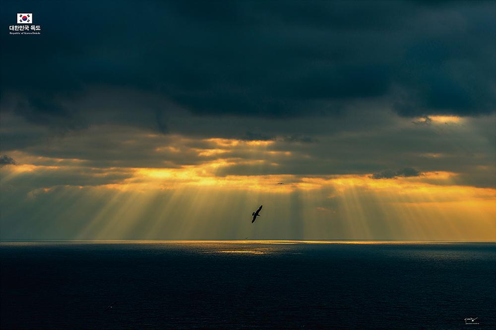 흐린 날 어둠 속에서 금빛 내림 바다를 무대 섬은 쾡이갈매기의 왈츠