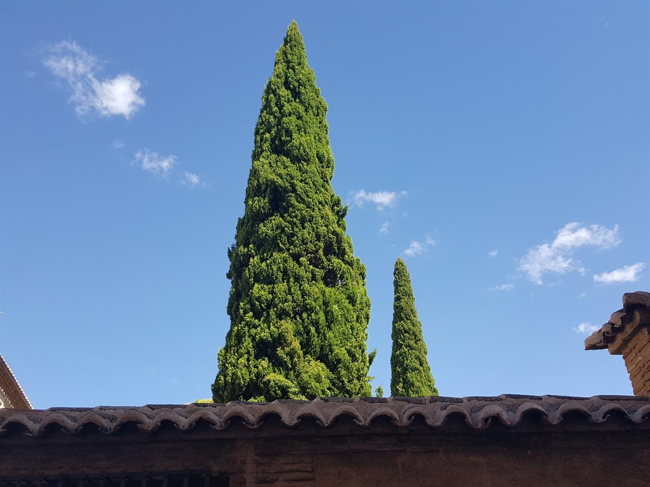 하늘을 향한 열망, 나무 두 구루 하늘을 향한 열망, 나무 두 구루