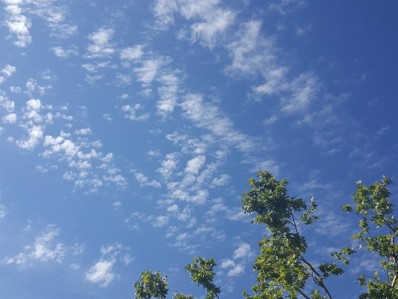 알함브라를 가는 길목의  하늘 그리고 나무 알함브라를 가는 길목의  하늘 그리고 나무