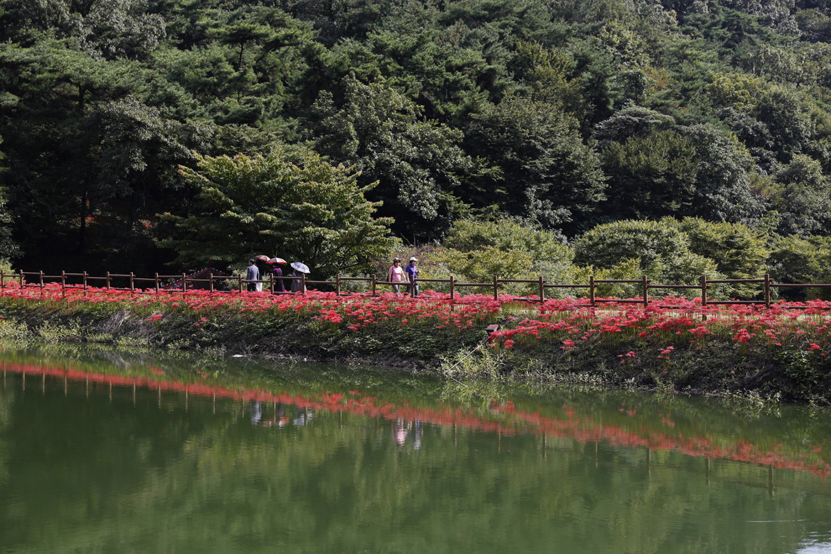 용천사 꽃무릇공원의 둔치 풍경. 지난 9월 21일 한낮 풍경이다.