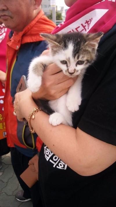 어제(23일) 시위 중 한 할머니가 양파망에 아기 고양이들을 넣어 구포시장으로 데려왔다. 결국 집회 참석자 몇몇이 고양이를 돈을 주고 사서 집으로 데려갔다.