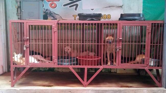 구포가축시장 내 탕제원 앞에는 이렇듯 살아 있는 개들이 철창에 갇혀 오가는 이들을 보고 있다. 그 중에 사진 속 맨 왼쪽 하얀 개가 나를 보며 웃는 듯 꼬리를 흔들었다.  '미안하다......'