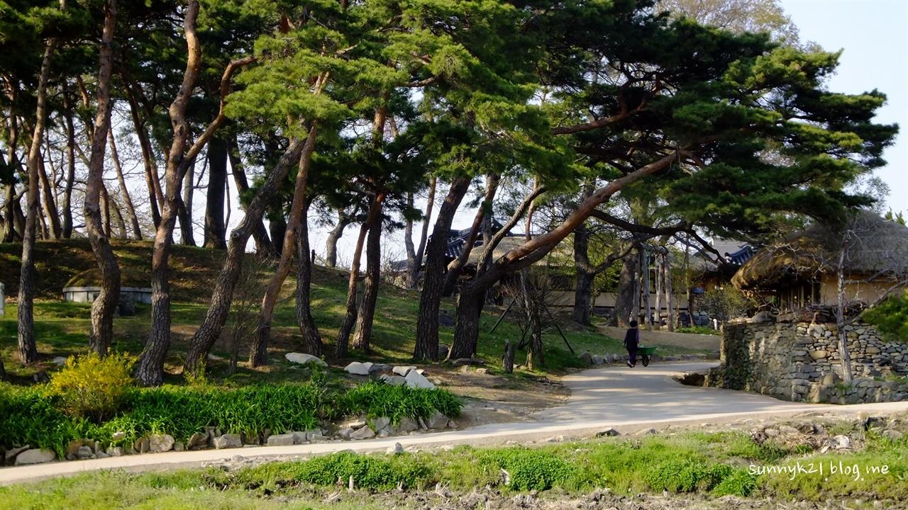 산림청에서 '마을 숲' 대상을 받을 정도로 나무가 많은 외암리 마을.