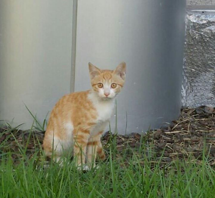 국회의사당 내 캣집을 찾은 길고양이.