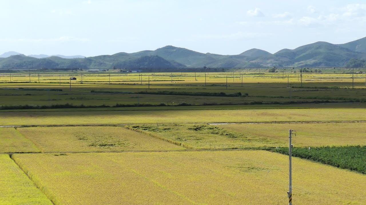 물을 가두어 벼농사를 짓는 논동사는 습지로서의 중요한 생태적 기능을 담당하고 있기도하다. 9월 29일 파주 문지리