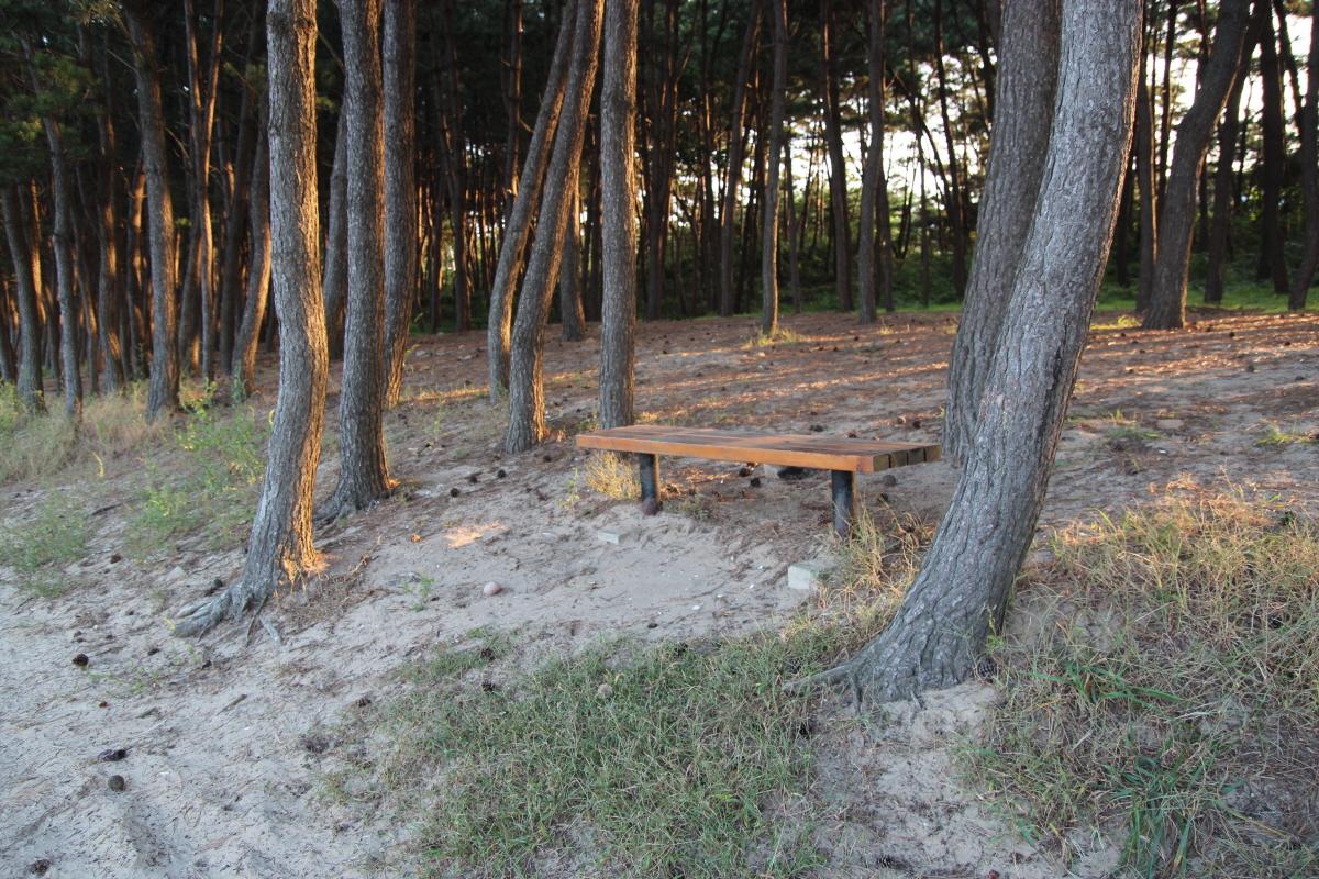 밧개해변의 곰솔 숲 사이에 있는 호젓한 긴 의자입니다. 쉬었다 가라고 손짓하는