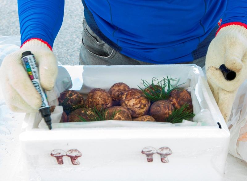 경북 영덕에서 채취된 송이버섯은 뛰어난 맛과 향을 자랑한다.