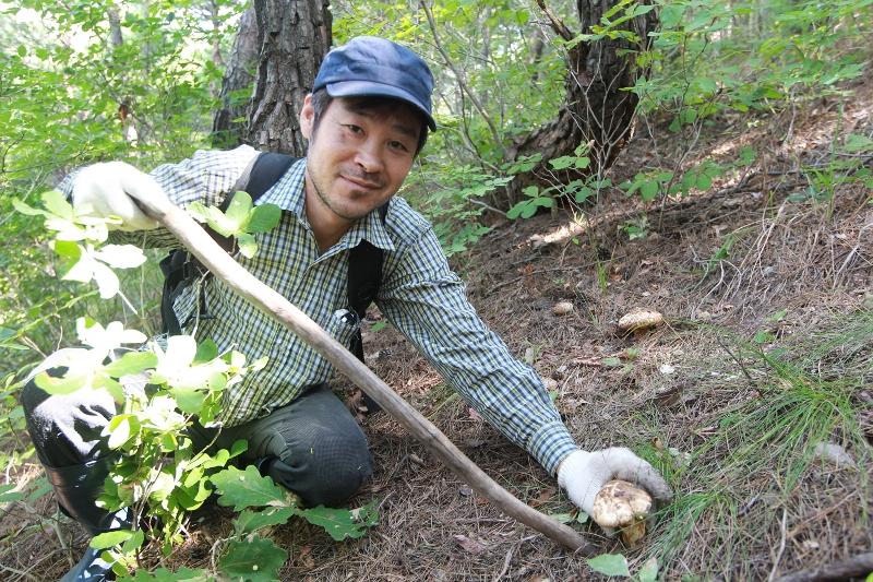 송이버섯을 발견한 후 조심스럽게 채취하고 있는 영덕의 농민.