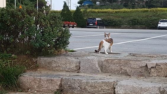 내가 따라 오는지를 확인하는 고양이 꼬꼬.