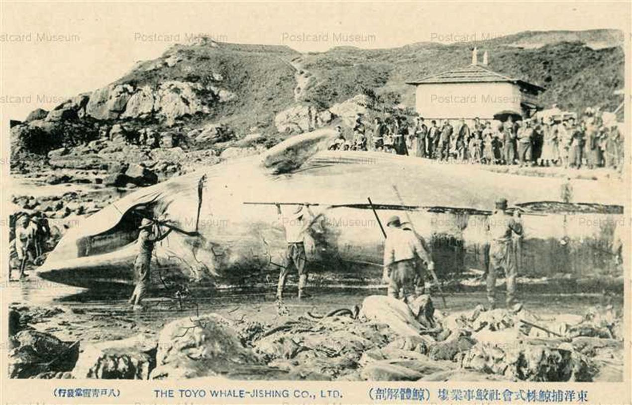 한반도 근해에서 가장 많이 대형 고래를 포획한 일본 포경회사는 동양포경주식회사였다. 동양포경주식회사는 대형 고래 해체 장면을 담은 기념 우편엽서를 만들 정도였다.