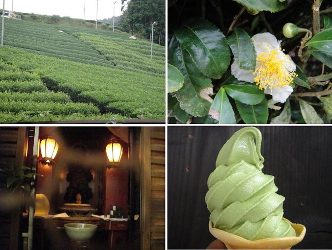 교토부 와즈카(和束町) 차밭과 요즘 차나무에 핀 차나무 꽃입니다. 지금도 교토에서는 신에게 차를 올리기도 합니다(사진 아래 왼쪽, 교토 대덕사 암자). 사진 아래 오른쪽은 차를 듬뿍 넣어서 만든 소프트 아이스크림입니다.