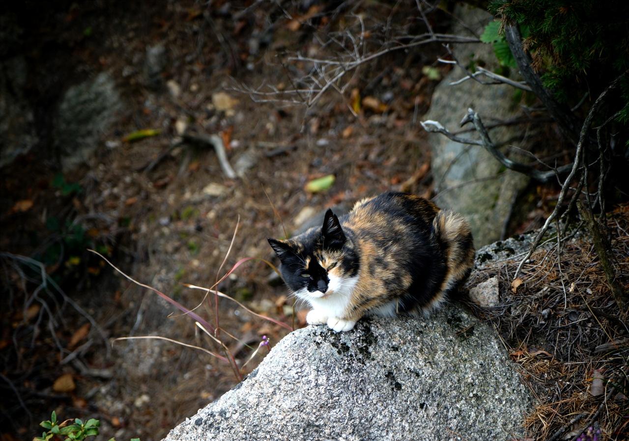 오봉 아래에서 만난 고양이