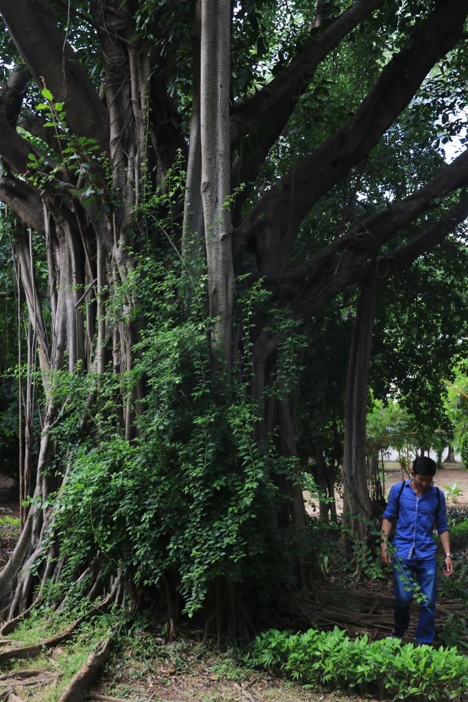대사관내 정원이라고 믿기지 않을 정도로 방대한 크기에 울창한 숲과 잘 가꾼 열대식물들로 꾸며진 프랑스대사관내 공원 모습.
