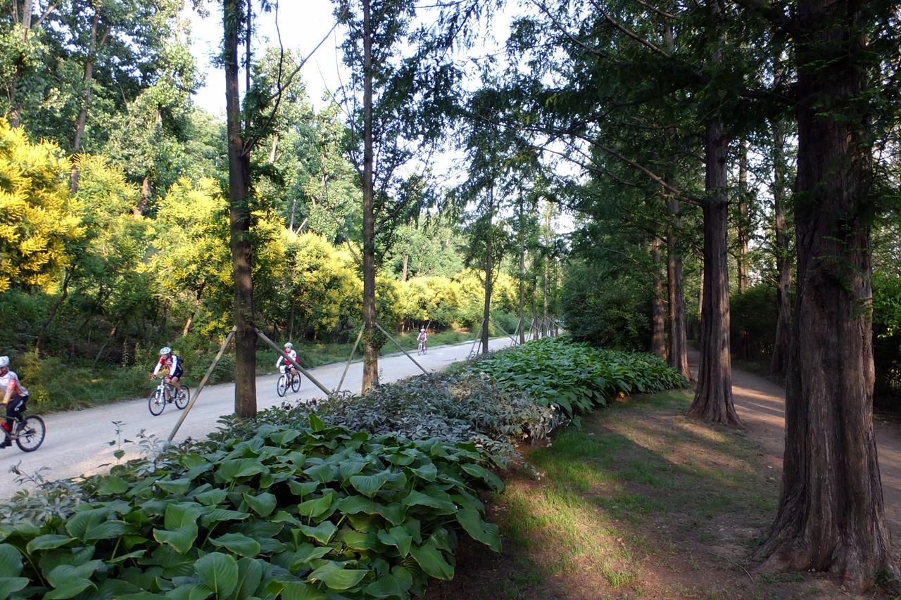 메타쉐쿼이아 숲길을 달리는 자전거탄 시민들.