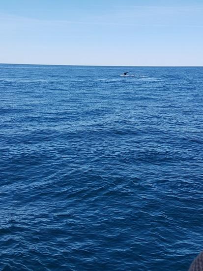 고래를 소유하지 않고 해양생태계를 잘 보호하는 것. 그것이 수족관의 임무이다.