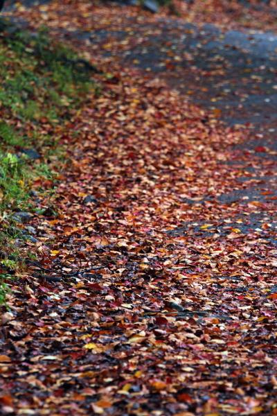 물기 머금은 낙엽은 뒹굴지도 자박자박 소리도 내지 않는다. 그저 시간과 멈췄다. 덩달아 멈춘 내 주위로 온 세상 고운 빛이 여기 다 모인 듯 반짝인다.