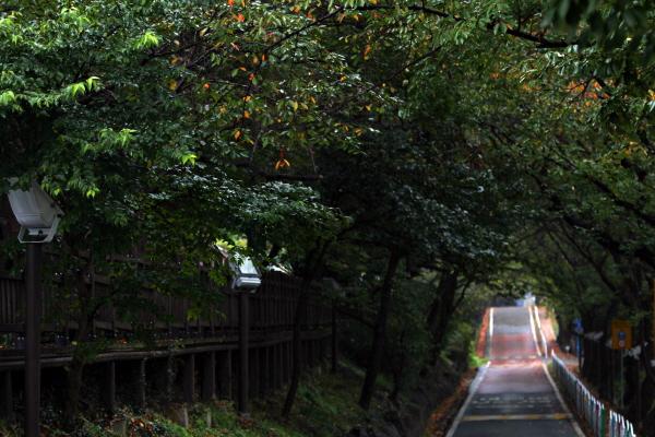 나무터널 사이로 가을비 따라 살짝살짝 바람이 일렁인다. 마음속 깊은 곳 꼭꼭 숨겨 놓은 묵은 찌꺼기가 날려간다.