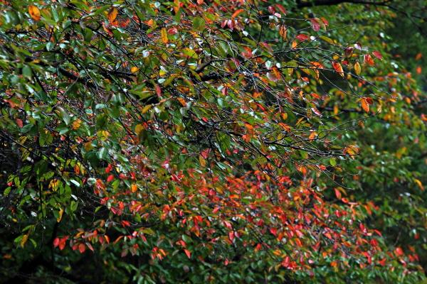 무르익은 가을이 말을 걸어온다. 잠시 걸음을 멈추고 귀를 기울인다. 가을이 내 안으로 들어왔다.