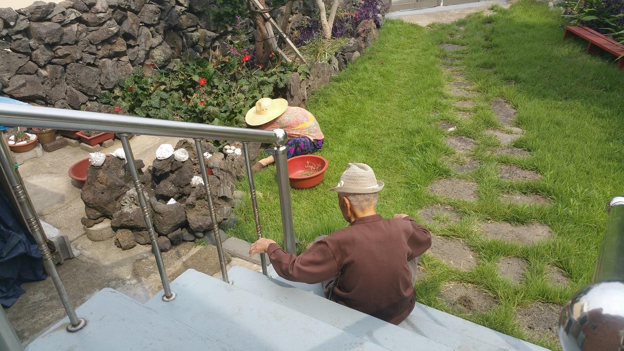추석맞이 마당정리 추석을 며칠 앞두고 어머니가 마당 잔디를 깎고 있다. 아버지는 일을 하실 수는 없었지만, 오랫만에 마당에 나와 잠시 앉아 있다.