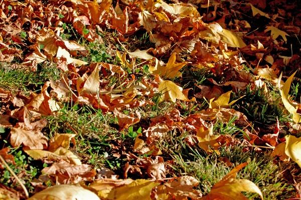 가을(자료사진)
