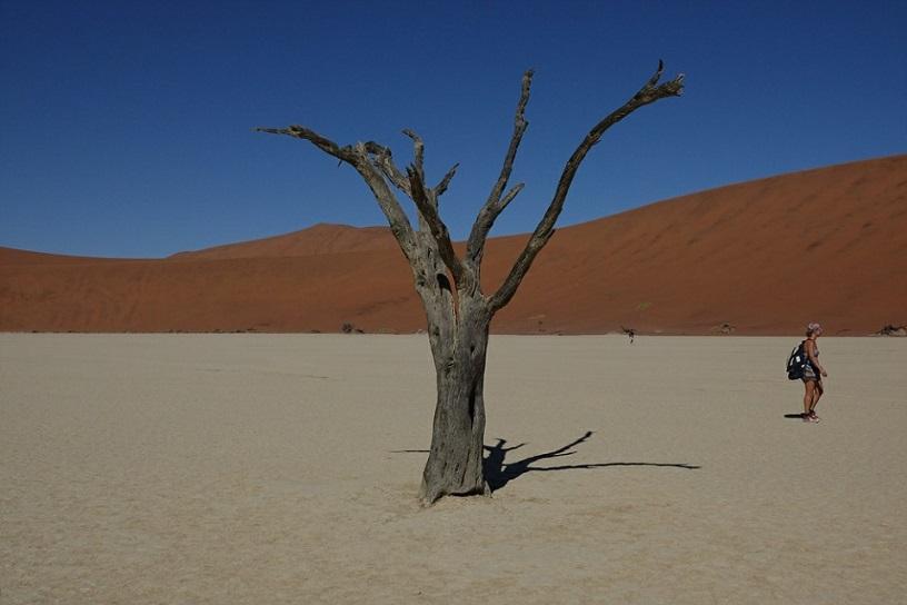 데드블레이의 고사목 저런 고사목들이 900여 년이라 지난 것이라는 것이 믿기지 않는다. 아무리 건조한 사막이지만 썪질 않는다니......