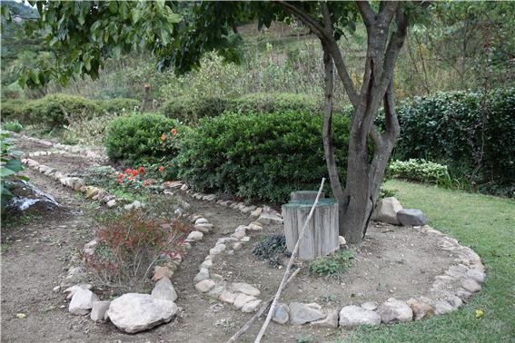 꽃밭                                              경계에 돌을 심었는데 멧돼지들은 돌 밑의 굼벵이와 지렁이를 찾아먹는다. 이 사진은 처음 꽃밭을 만들었을 때 잡은 것이다.
