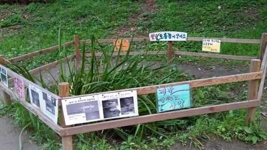 도룡뇽 양재천 생태지역에 도룡뇽 서식지 현장 학습장