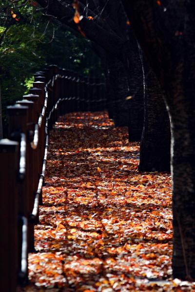 하동호 주위 산책로