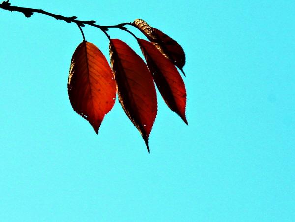 시간은 머물고 우리는 물든다. 무르익은 가을이 말을 걸어오는 풍경이다. 지금 하동호수는 가을이 진하게 퍼지고 있다.